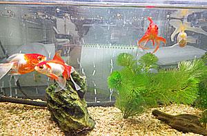 1f_fish